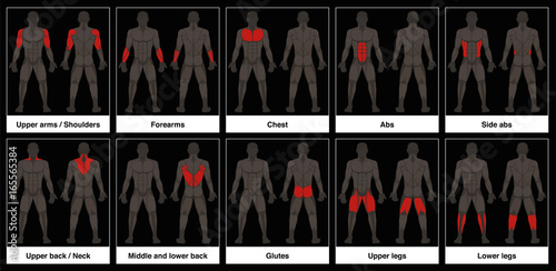 Muscle chart - male body, frontal and back view with highlighted red muscle parts - isolated vector illustration on black background Tablou Canvas