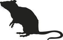 Vector Silhouette Of A Rat