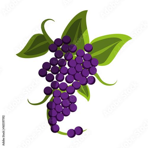 Fresh delicious grape fruit Fototapete