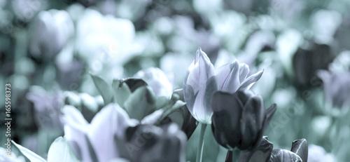 Foto-Schiebegardine ohne Schienensystem - tinted tulips concept (von bittedankeschön)