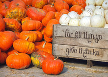 White And Orange Pumpkin With Inspiration Thanksgiving Text On Wooden Box