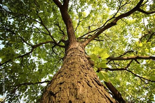 Green tree Obraz na płótnie