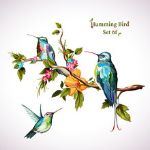 Humming Birds. Set Of Three Hu...