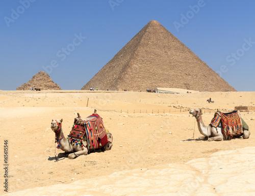 Poster Chameau Ancient Egypt