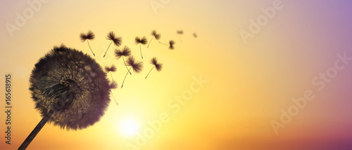 Poster Pissenlit Schöne Pusteblume