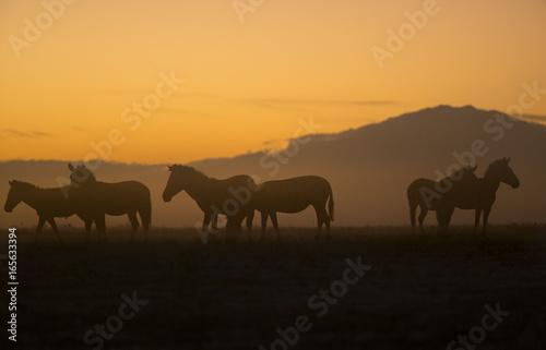 Spoed Foto op Canvas Marokko Animal