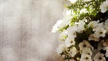 White Petunia Background, Effect Cross Hetch