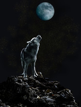 A Lone Wolf Sings His Sad Song...