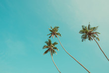 Three Tropical Palm Trees Over Clear Blue Sky Background Vintage Color Stylized