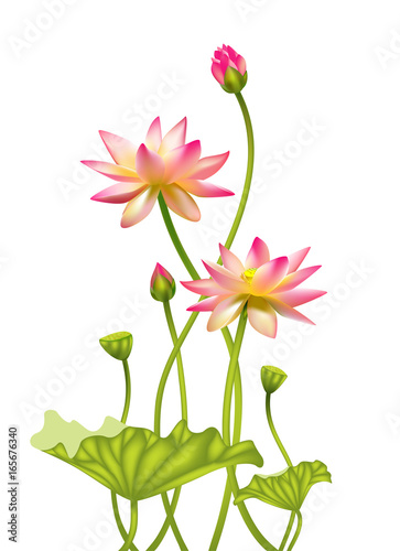 Pink lotus beautiful floral background buddhism symbol border pink lotus beautiful floral background buddhism symbol border spa center mightylinksfo