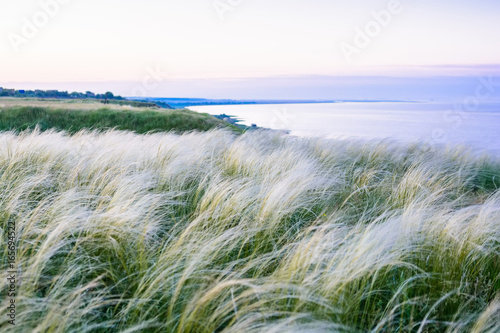 Stickers pour porte Kaki Field with feather grass Stipa beautiful landscape