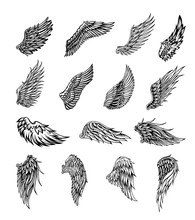 Wings Graphic Illustration