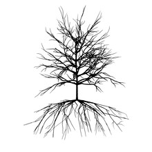 Black And White Single Tree Shape