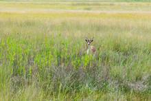 The Habitat Of Deer In The Wil...