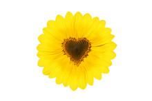 Wunderschöne Sonnenblume Mit ...