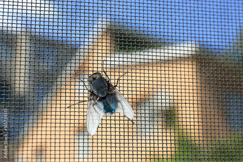 Fotografía  Fly on window screen, closeup