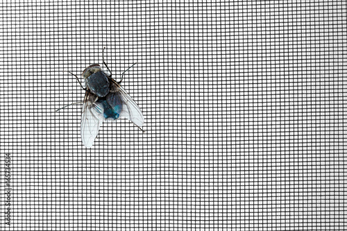 Annoying fly on window screen