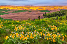 Sunset And Wildflowers On Sout...