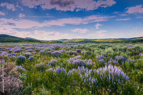 Tuinposter Lavendel Blue Flowers and Sage Below Wyoming Range, Wind River Mountains.