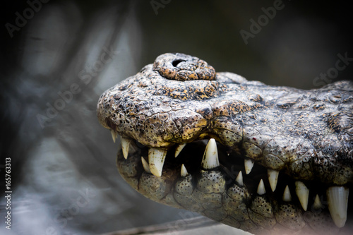 Mouth of the crocodile hunter.