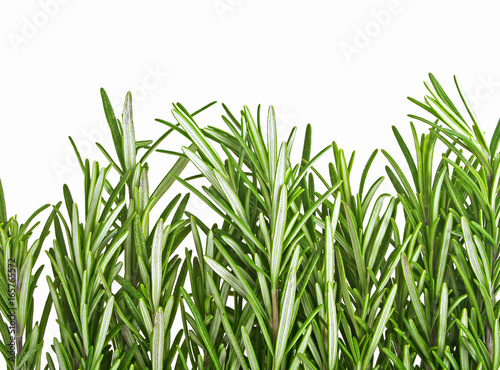 Foto auf AluDibond Ziehen Pile of rosemary leaf isolated on a white background