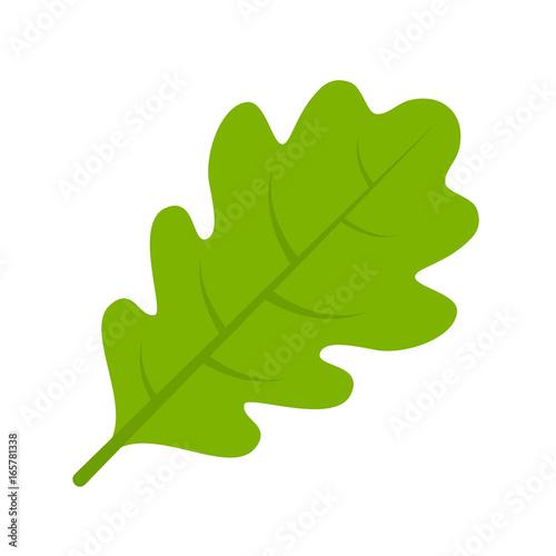 Obraz Green oak leaf vector illustration - fototapety do salonu