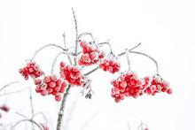 Autumn And Snow. Beautiful Winter.