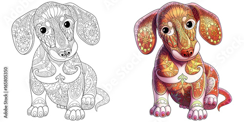Coloring Book Page Of Dachshund Puppy Dog Monochrome And Colored Samples Freehand Sketch Drawing