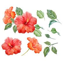 Watercolor Vector Tropical Hib...