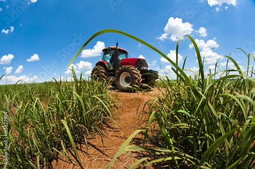 Zdjęcie XXL Rolnictwo trzciny cukrowej