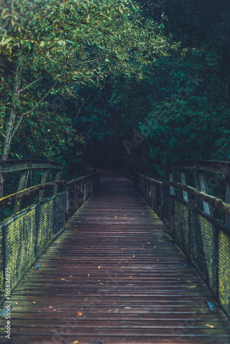 Foto op Plexiglas Bruggen the bridge to woods