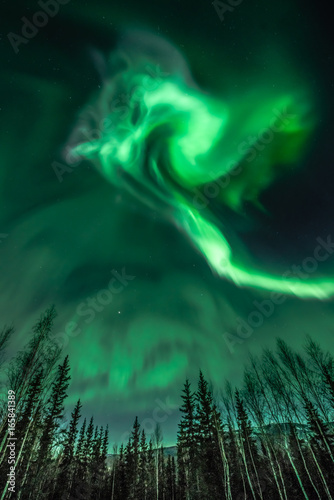 Photo  Northern Lights Spiral Shape over trees in Alaska