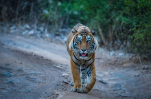 On Patrolling His Territory