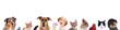 Leinwandbild Motiv Tierköpfe verschiedener Haustiere in einer Reihe