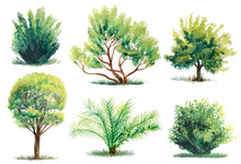 Set Of Watercolor Trees And Bu...