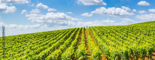 Photo sur Aluminium Vignoble Vineyards of Burgundy