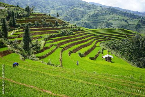 Garden Poster Rice fields Rice Terrace in Mu Cang Chai, Vietnam