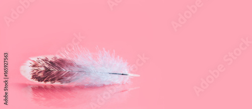 Fluffy colorful feather on pink background Wallpaper Mural