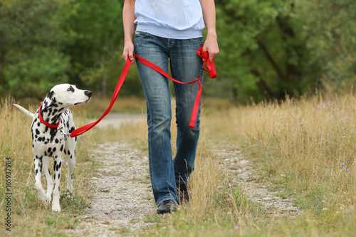 Fotografia  Mature woman is walking a dalmatian dog on a leash  in nature environment