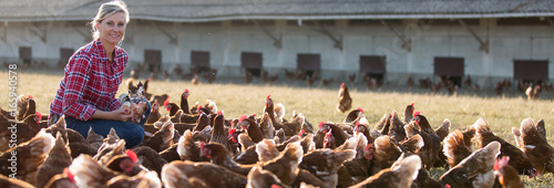 Fototapeta female farmer in farm with chicken