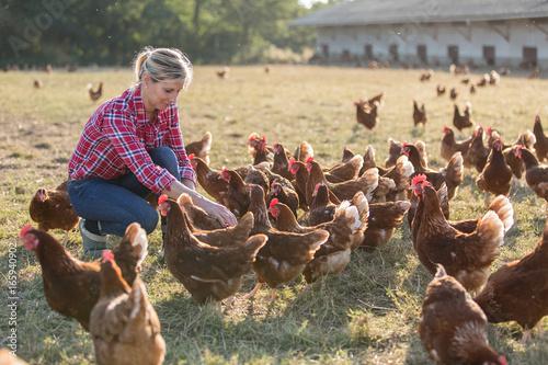 female farmer looking for eggs Fototapeta