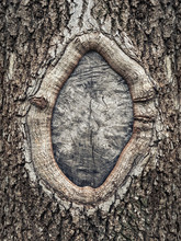 Hole In The Bark Of A Tree Close Up