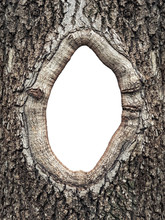 Frame  In The Bark Of A Tree C...