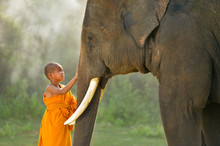 Novice Monks And Elephant ,Tha...