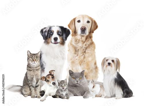 Hunde Katzen freigestellt Fototapete
