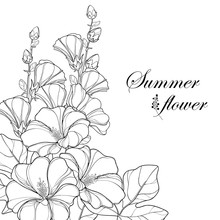 Vector Bouquet With Outline Alcea Rosea Or Hollyhock Flower, Bud And Leaf Isolated On White Background. Corner Composition In Contour Style With Ornate Hollyhock For Summer Design And Coloring Book.