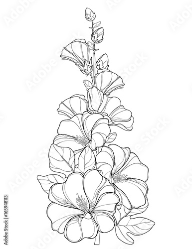 Vector bunch with outline Alcea rosea or Hollyhock flower ...