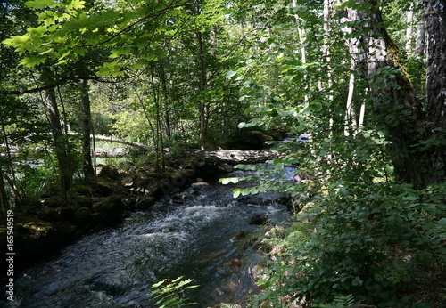Wall Murals Forest River channel