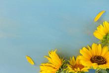 Fresh Yellow Sunflowers On Blu...