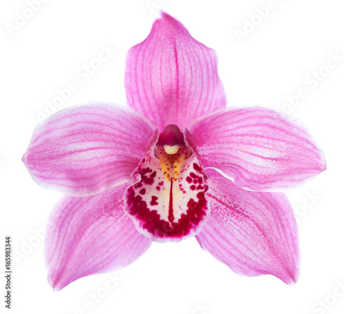 Foto auf Leinwand Orchideen Close-up of pink Orchid flower (Cymbidium) isolated on white background.